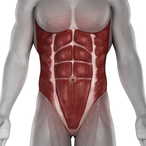 Kelowna Gyms - One Life Fitness - Abdominal muscles